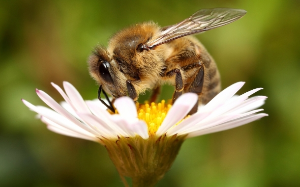 Symbiotic pollination