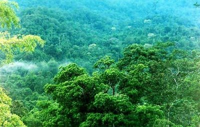 Indonesian rainforest. Not my image.