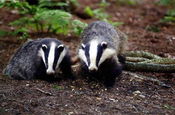 Image from www.wildlifeextra.com