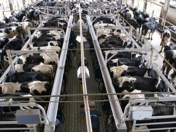 Intensive factory farming of cows. Not my image.